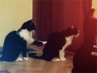 Cat Tries to Apologize to Another Cat