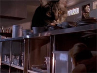 Hungry Cats Attack in <i>Jurassic Park</i>