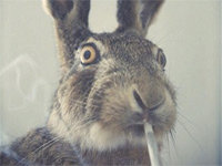 The Internet Celebrates Easter on 4/20