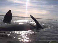Kayakers Nearly Thrown Overboard by Whales