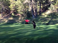Adorable Bear Cub Hits the Golf Course