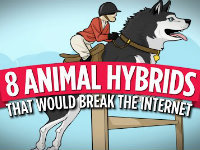 The Animal Hybrids of Your Dreams