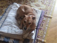 Ebola Patient's Dog Euthanized in Spain