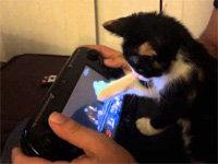 Cute Kitten Plays <i>Super Smash Bros</i> for Wii U