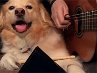 Maple the Dog Demands More Cowbell