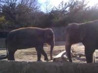 Elephant Ragequits Woodcraft Workshop 101