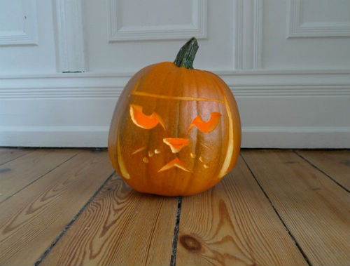 Pumpkin Lime Cat is Not Amused