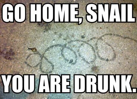 Memebase: Alcoholic Snail