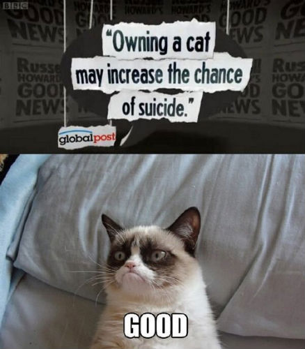 Grumpy Cat Watches the News