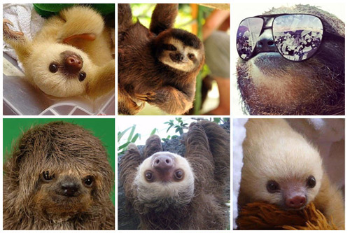 KYM Gallery: Sloths