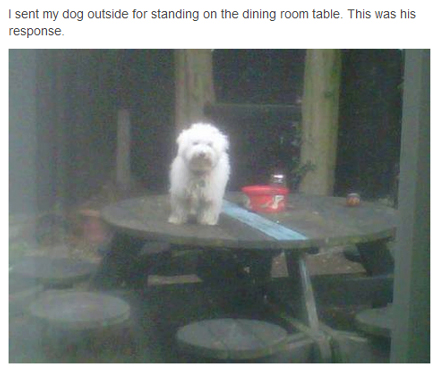 "Defiant Dog Says ""F**k Your Table"""