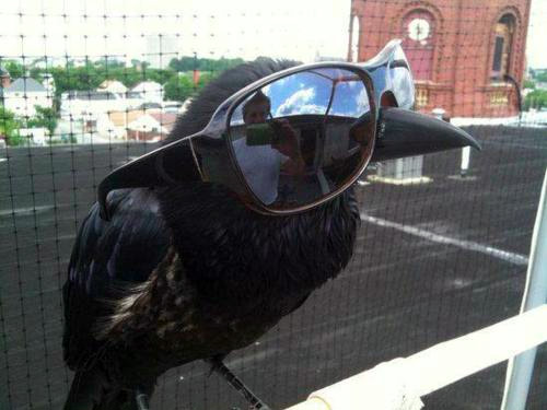 """Quoth The Raven, """"Swag Galore"""""""