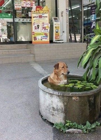 """I'm Just Chillin' Dog"""