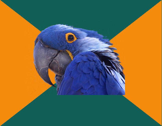 Parrot Template   Template Paranoid Parrot Know Your Meme