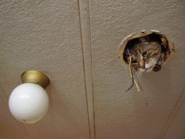 Image 16658 ceiling cat know your meme ceiling cat image 16658 mozeypictures Image collections