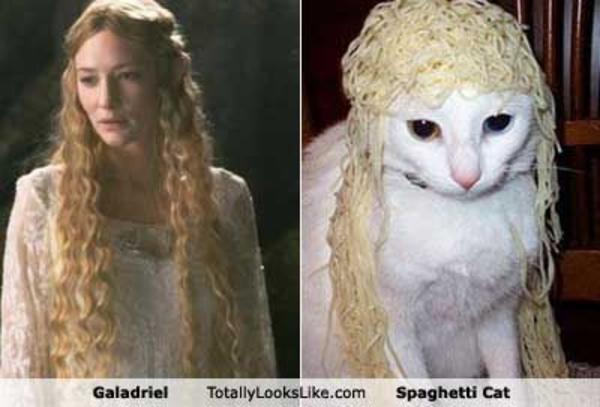 image 19180 spaghetti cat know your meme