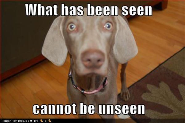 http://i0.kym-cdn.com/photos/images/facebook/000/025/391/funny-dog-pictures-what-has-been-seen.jpg