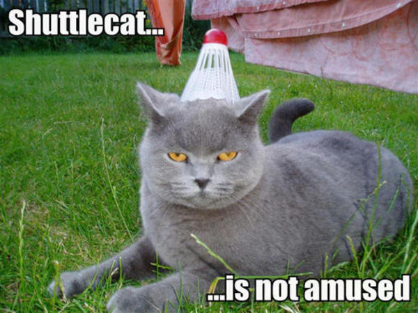 shuttlecat is not amused 771503 image 25917] trashcat is not amused know your meme
