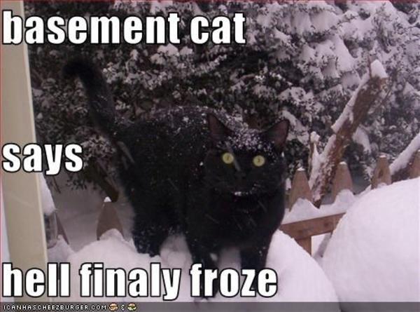 [Image - 32896] | Basement Cat | Know Your Meme