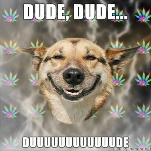 Stoner Dog DUDE image 51156] stoner dog know your meme,Bored Af Meme