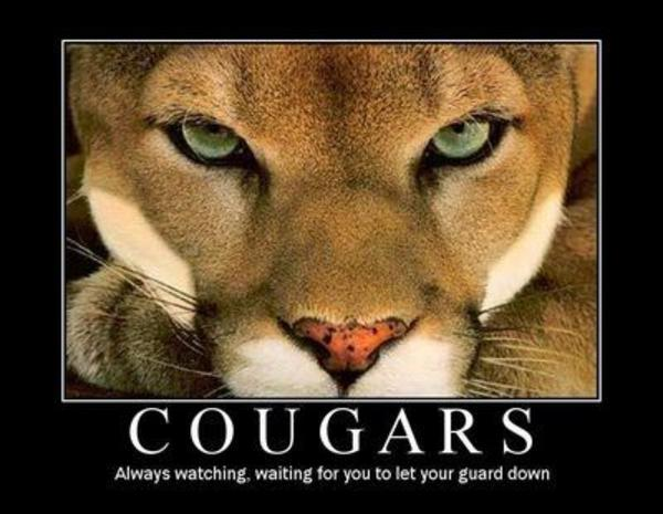 CougarMotivational mauled by cougar* image gallery know your meme,Cougar Memes