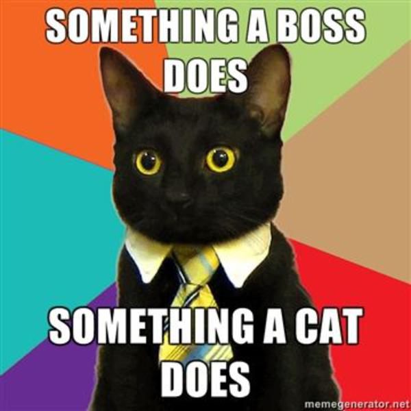 Business Cat Know Your Meme - 8 cat puns that will put a smile on your face