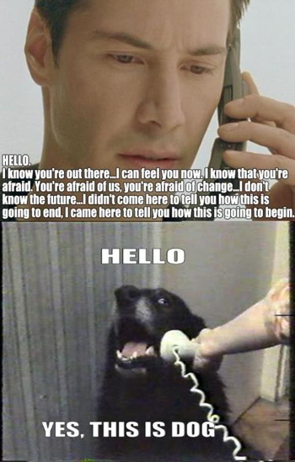 Dog Phone Meme is Dog Know Your Meme