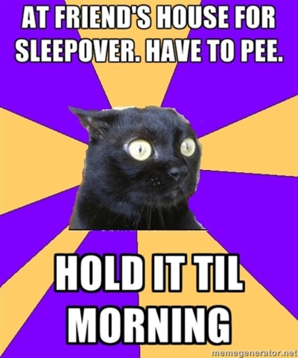 tumblr_lvkl95naJL1qcgf00o1_400 anxiety cat image gallery know your meme