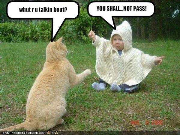 128796915457939066 image 222558] you shall not pass!!! know your meme,Meme Muumi