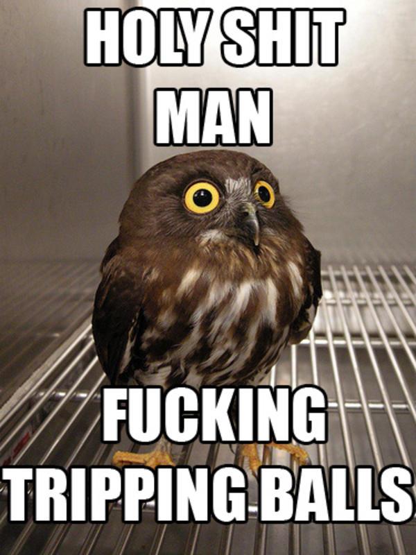 126 image 264585] tripping balls know your meme,Meme Muumi
