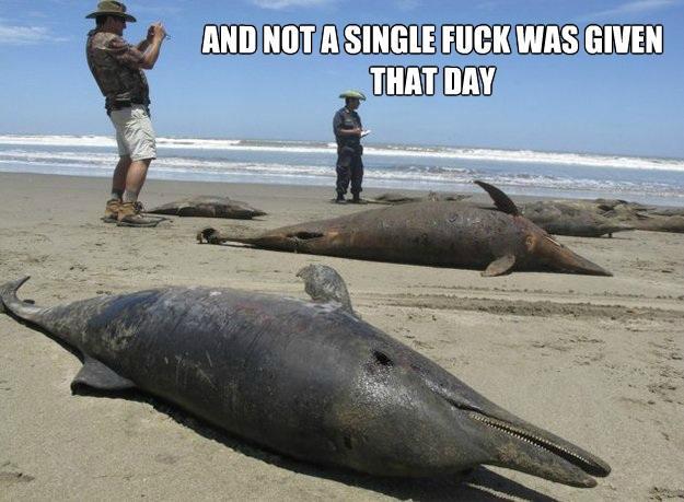 a dolphin fuck