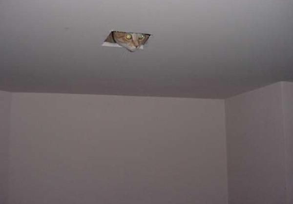 Image result for ceiling cat
