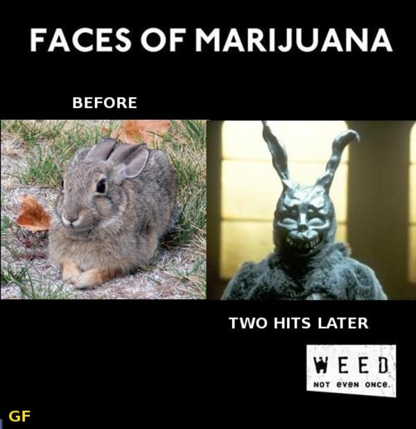 Cannabis Weed Funny Cat