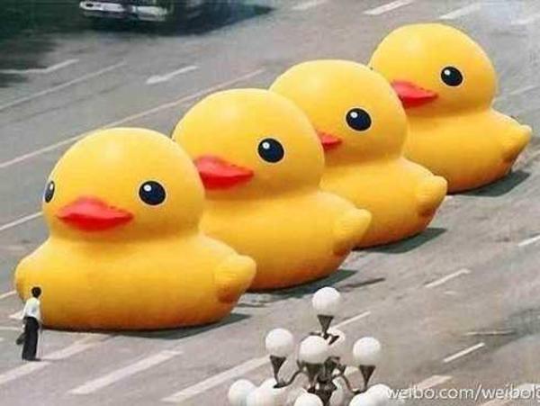 e25 big yellow duck know your meme,Duck Meme
