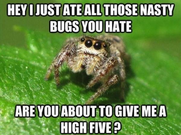 eda image 565631] misunderstood spider know your meme,Misunderstood Spider Meme