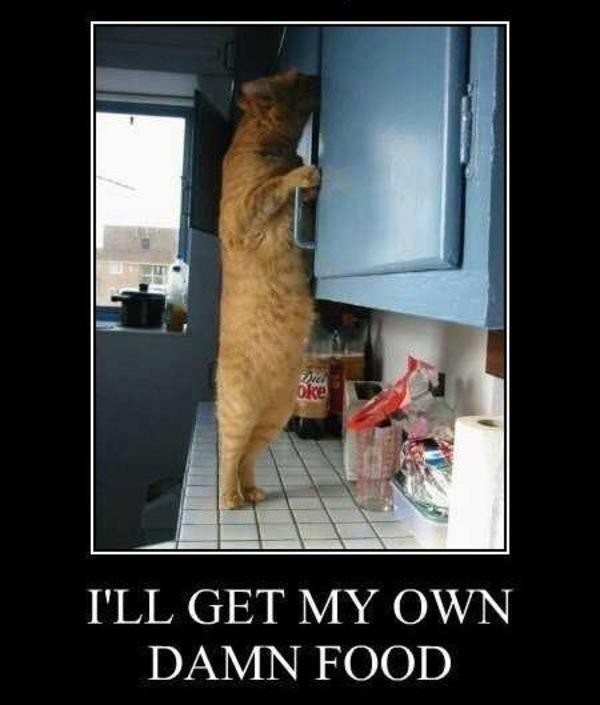 ea4 image 590217] standing cat know your meme