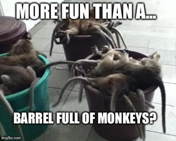 509 more fun than a barrel of monkeys know your meme,Dead Monkey Meme