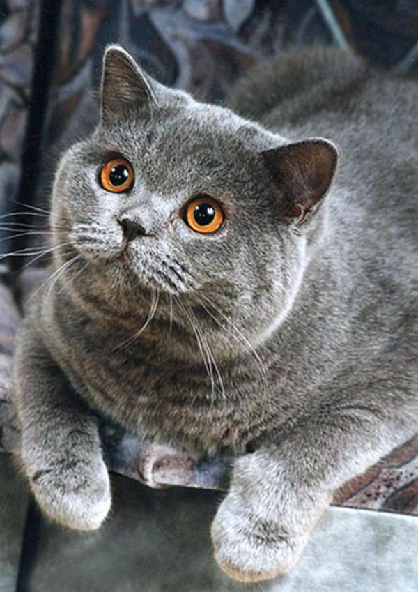 Happy Cat lying | Happy Cat | Know Your Meme