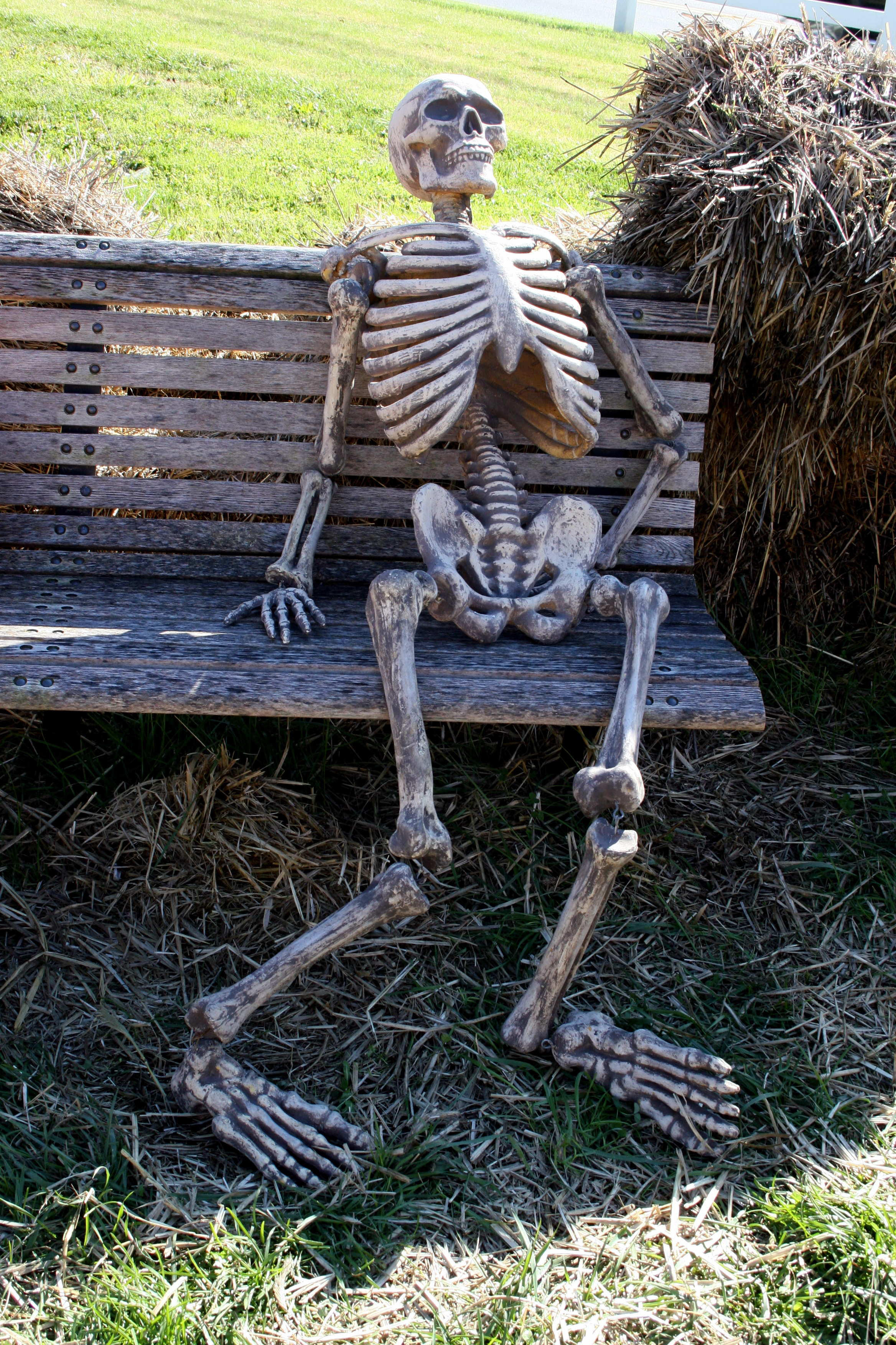 442 waited too long skeletons know your meme