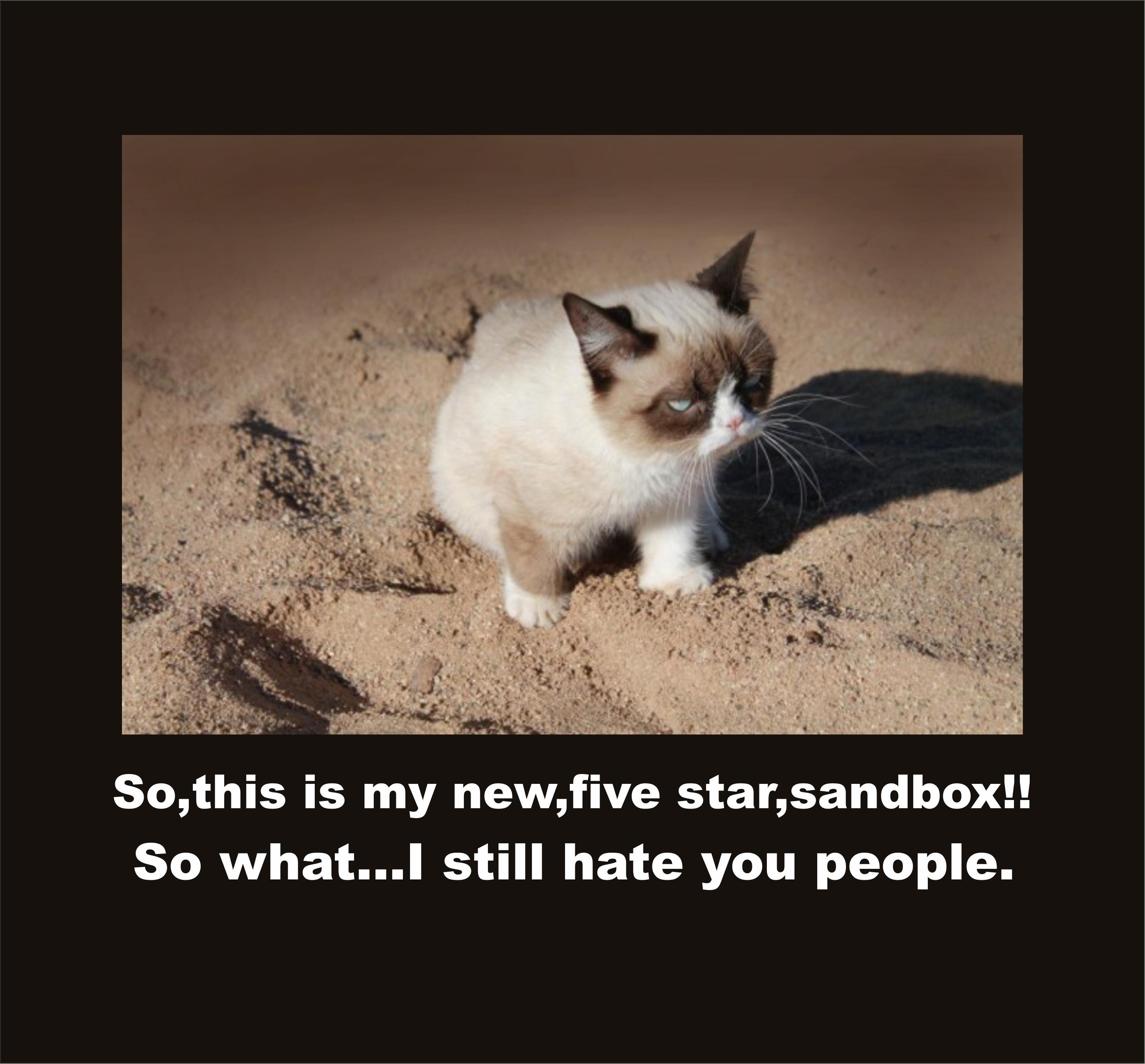 Image ] Grumpy Cat