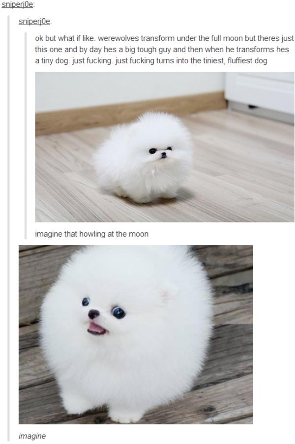 White Furry Cat Meme