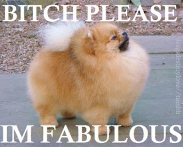 eaa bitch i'm fabulous know your meme