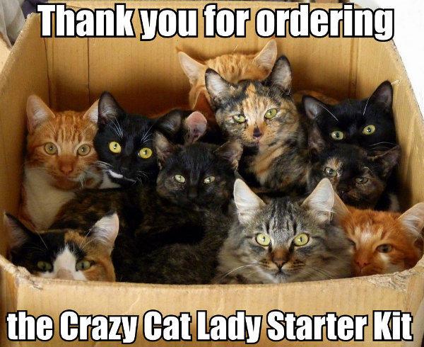 e44 the crazy cat lady starter kit starter packs know your meme