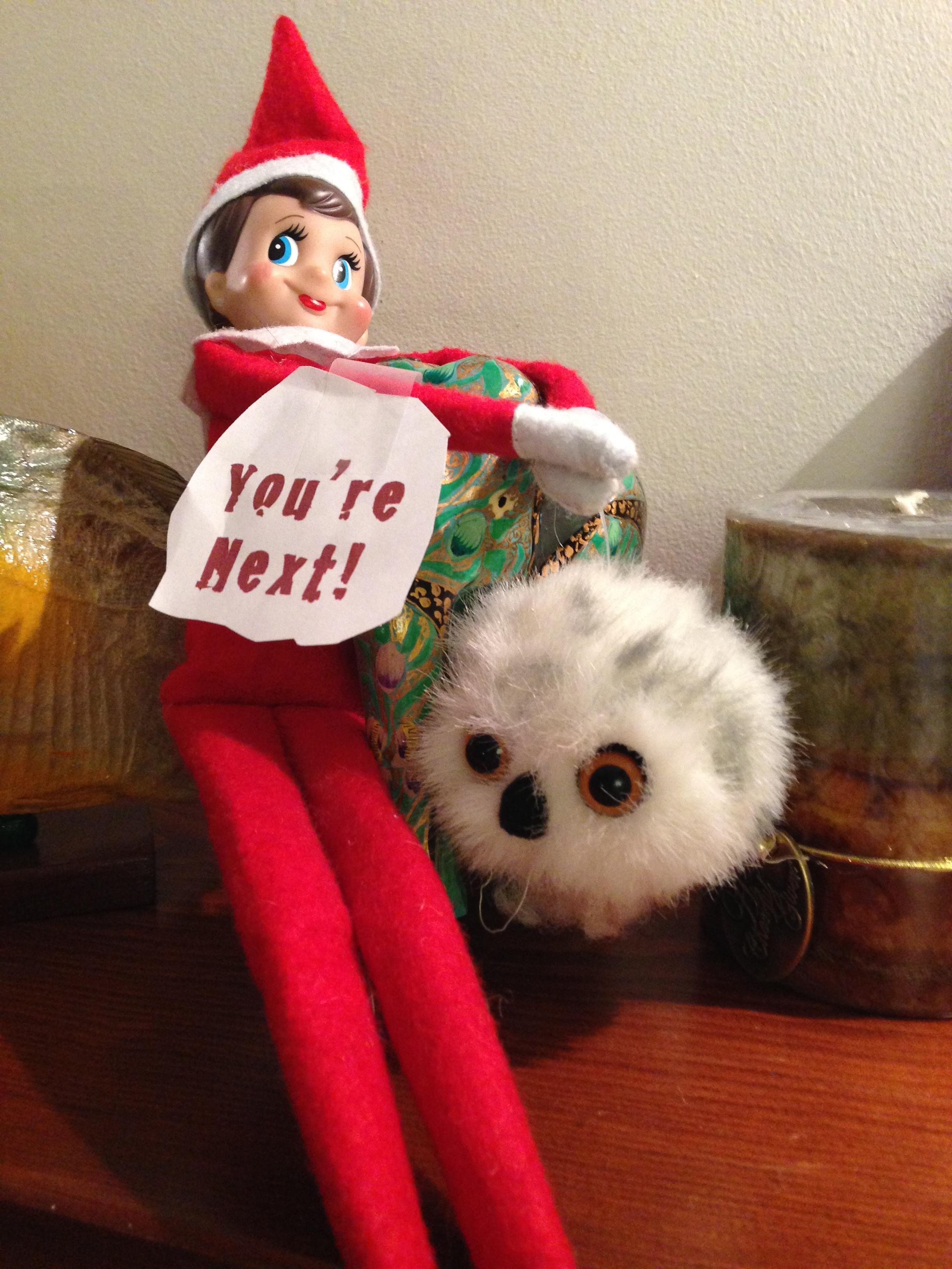 elf on the shelf - you are next | Elf on the Shelf | Know ...