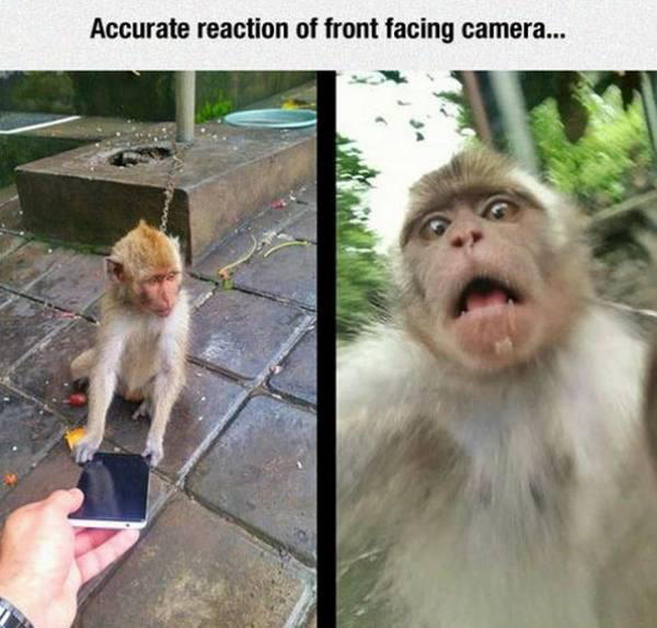 172 monkey see, monkey do know your meme,Dead Monkey Meme