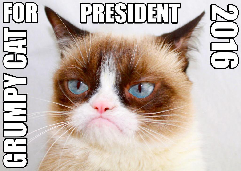 Grumpy Cat Walk Of Fame