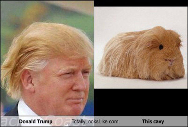 Donald Trump Funny Hair Memes : Totally looks like donald trump know your meme