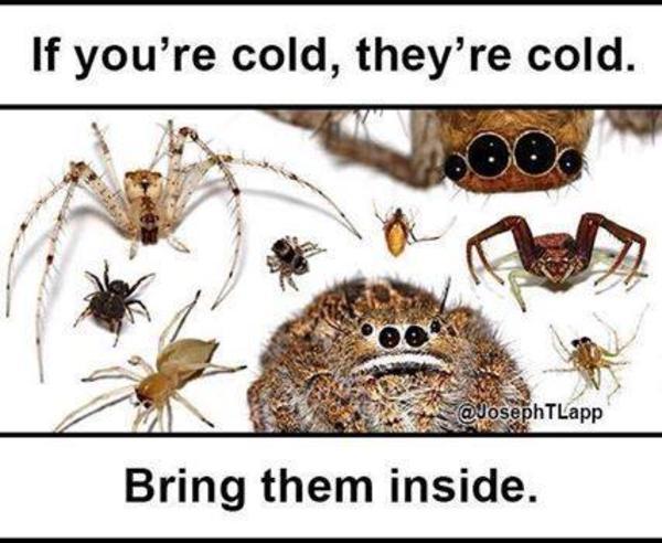 312 misunderstood spider image gallery know your meme,Misunderstood Spider Meme