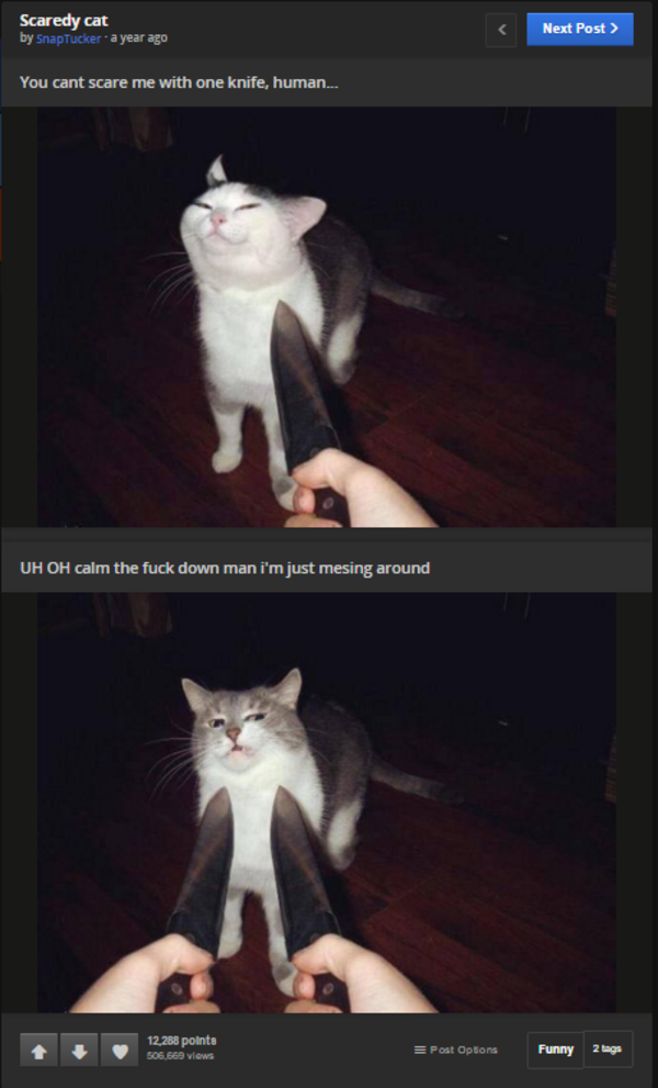 Knife Pointed At Cat Meme