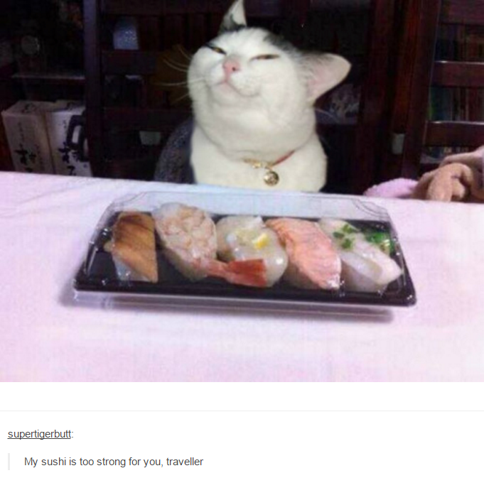 My sushi is too strong for you, traveller | Smug Knife Cat ...